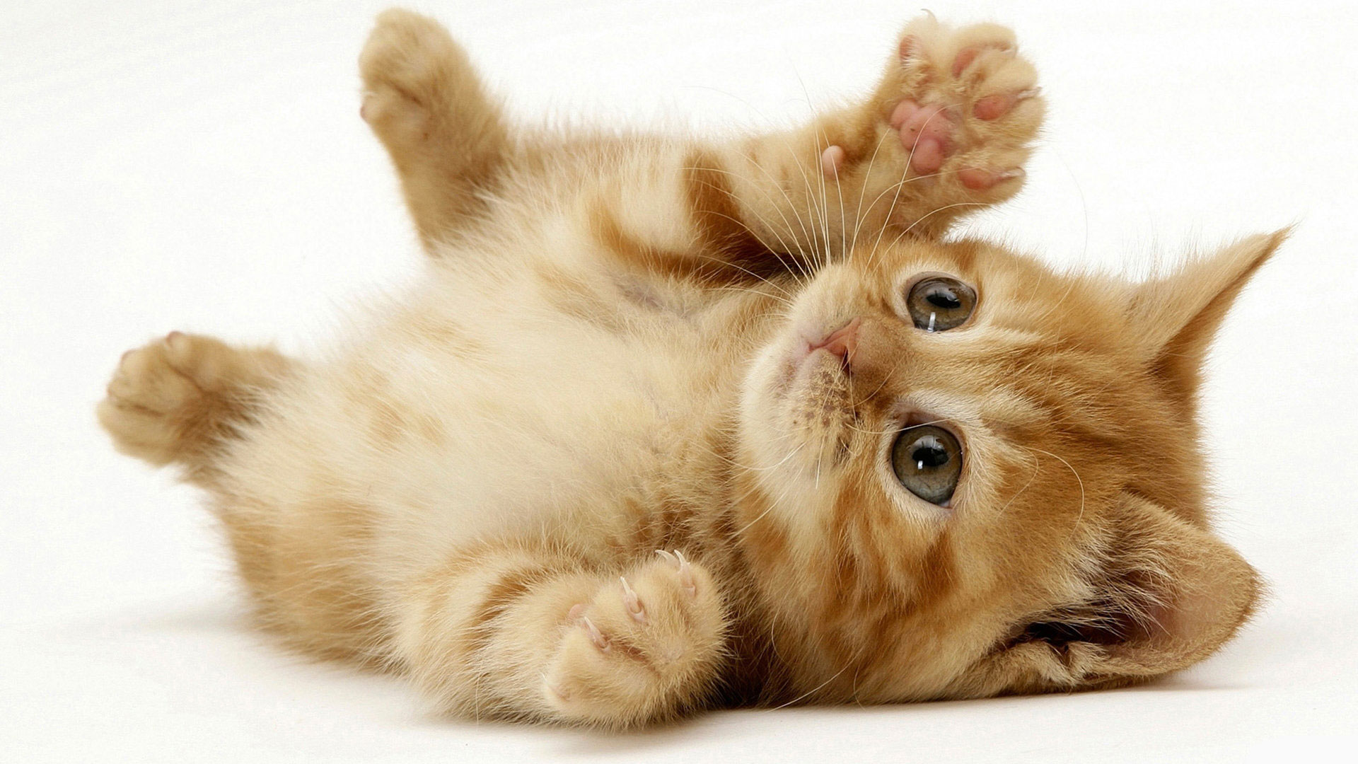 little_cute_cat_1920x1080.jpg