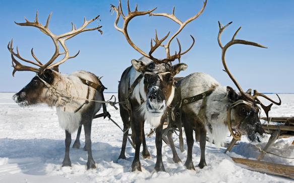 Raindeer-sleigh-ride-Yakutia-802x500